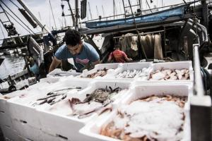 Black Sea and Mediterranean fish stocks